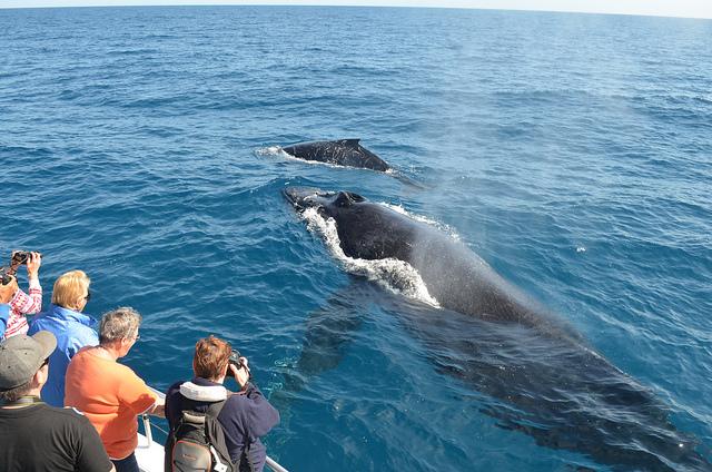 Whale-watching-mirissa-sri-lanka